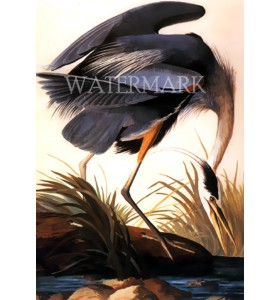"Great Blue Heron (Without frame) ( 9""x12"")"