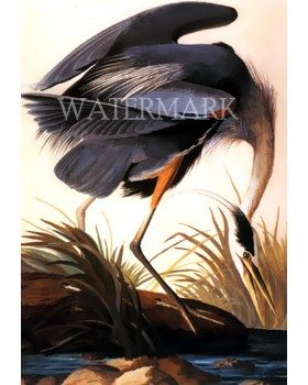 "Great Blue Heron (Without frame) : (14""x20"")"